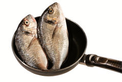 Two dorada fishes on pan (isolated). Two dorada fishes on pan (isolated on white royalty free stock photography