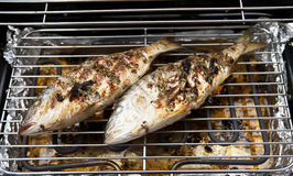 Two Dorade fishes on the barbecue Stock Photos