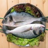 Two dorado fishes in the pan Stock Images