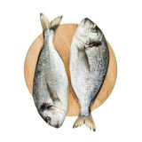 Two dorado fishes on round wooden board Stock Images