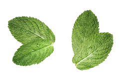 Two double mint leaves composition isolated on white Stock Photo