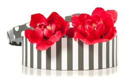 Two double red tulips in a giftbox Royalty Free Stock Photography