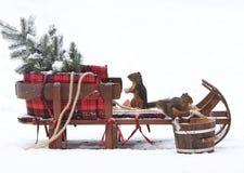 Two Douglas Squirrel on Christmas Sleigh stock photography