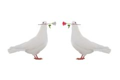 Two  dove Royalty Free Stock Photography