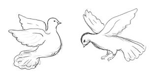 Two dove sketch. Two dove bird sketch, pencil drawing of flying dove Stock Images