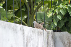 Two dove stand on fence stock image