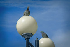 Two doves on blue sky background Royalty Free Stock Photography