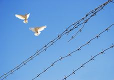 Free Two Doves In Sky Stock Photography - 5150582
