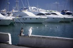 Two doves looking over the harbor stock image