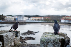 Two doves perched on the battlements of a medieval castle on a r Royalty Free Stock Photo