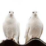 Two doves. On a roof on a white background stock images