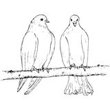 Two doves at tree branch Stock Image