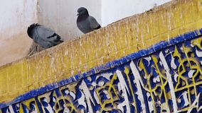 Two doves on wall panels. A steady shot of two doves on top of a wall panel stock video footage