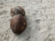 Two dried coconut on the sand background texture Royalty Free Stock Photography