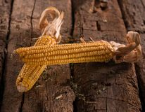 Two dried corns Stock Photography
