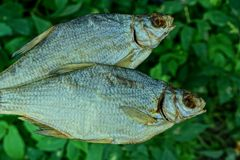 Two dried fish on a background of green leaves royalty free stock photos