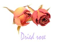 Two dried rose Royalty Free Stock Photo