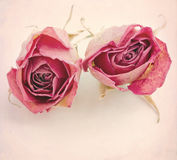 Two dried roses Royalty Free Stock Images