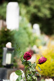 Dried roses on a grave. Two dried roses with some gravestones on the background Stock Images