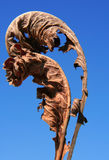 Two dry leaves. Against the dark blue sky Stock Image