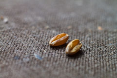Two dry wheat grains close up on blurred background brown canvas Stock Photos