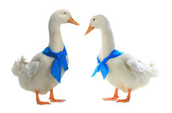 Free Two Duck Royalty Free Stock Image - 71913286