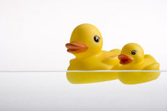 Two duckies. Two yellow rubber duckies swimming Stock Photos