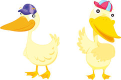Free Two Ducks Royalty Free Stock Image - 8848226