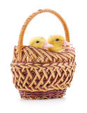 Two ducks in a basket. Stock Images