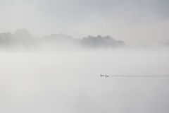 Two ducks floating in the misty lake Royalty Free Stock Photos