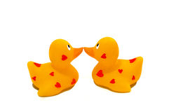 Two Ducks Kiss. Love ducks kissing on a white background Stock Photography