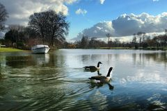 Two ducks in lake. Sky and clouds reflected in the lake Royalty Free Stock Images