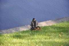 Two ducks. Stock Photo