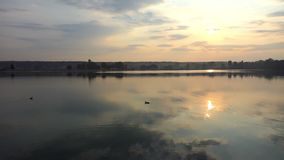 Two ducks swim in a forest lake at splendid sunset in slo-mo. An impressive long shot of two brown ducks swimming in a forest lake at splendid sunset in summer stock video footage