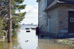 Two ducks swim on a homes flooded lawn. A house sits on the side of a rising river in Gatineau Quebec, Canada. Ottawa River levels are at an all time high and stock photography