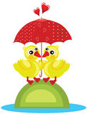 Two Ducks Under Red Umbrella. Two yellow ducks under a red umbrella and hearts Stock Photo