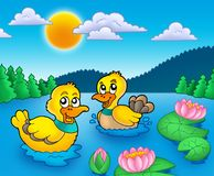 Two ducks and water lillies Royalty Free Stock Photo