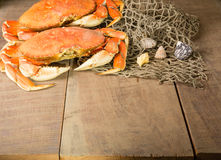 Dungeness crab ready to cook Royalty Free Stock Image