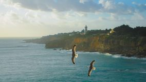 Two eagles flying over the sea Stock Photo