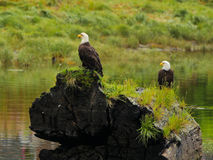 Two Eagles sitting Stock Photography