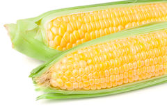 Two ear of corn with leaves isolated on white background Royalty Free Stock Images