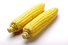 Two Ears of Corn Stock Image