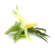 Two ears of corn Royalty Free Stock Photos