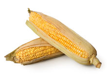 Two ears of corn Royalty Free Stock Image