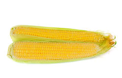 Two ears of corn isolated on white Stock Photo