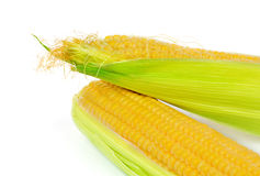 Two ears of corn isolated on white Royalty Free Stock Photos