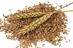 Two ears of wheat on wheat grains stock photos