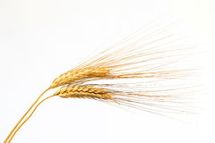 Two ears of wheat on white background Royalty Free Stock Images