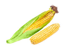 Two ears of young corn on a light background closeup Royalty Free Stock Photos