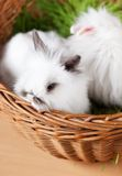 Two easter bunnies are in the basket Royalty Free Stock Photo